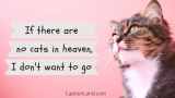 100+ Captions for CAT Pictures Purr-fect for Instagram